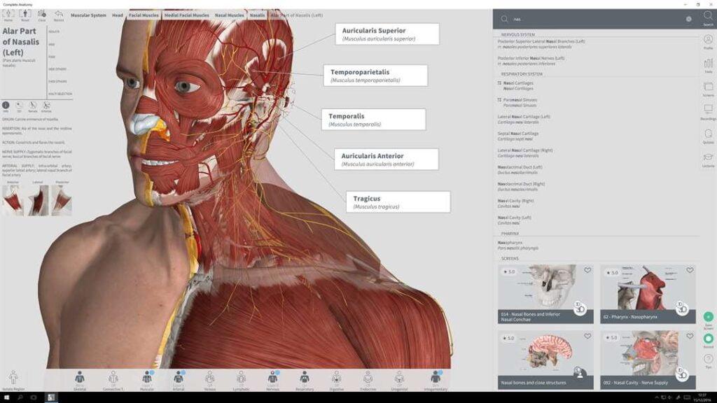Sistema musculatorio