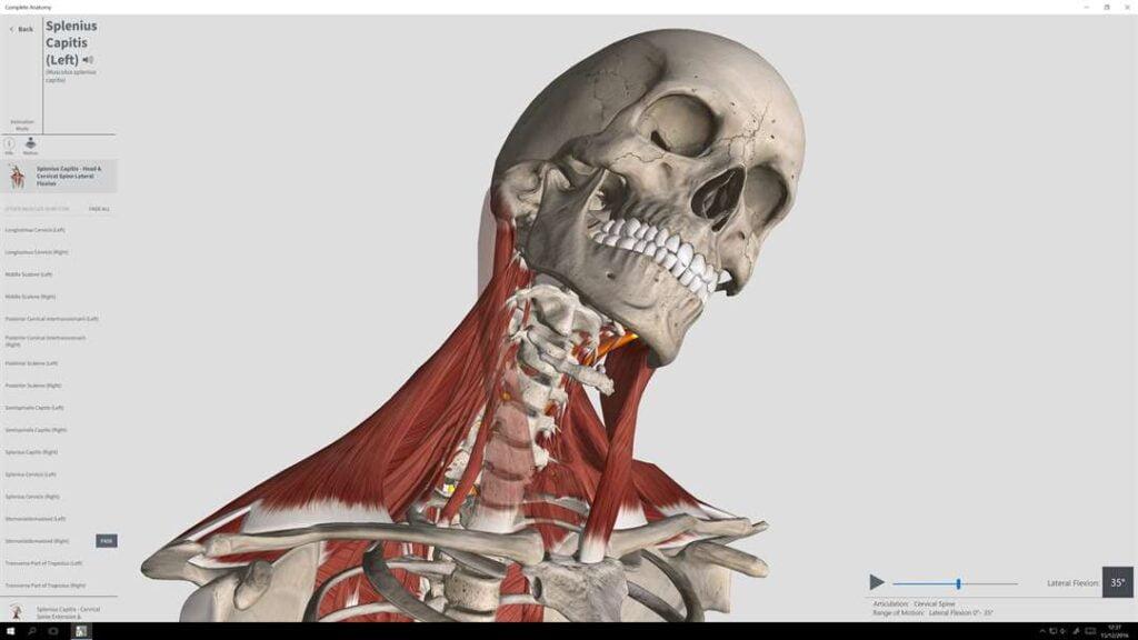 Modelado del cuello